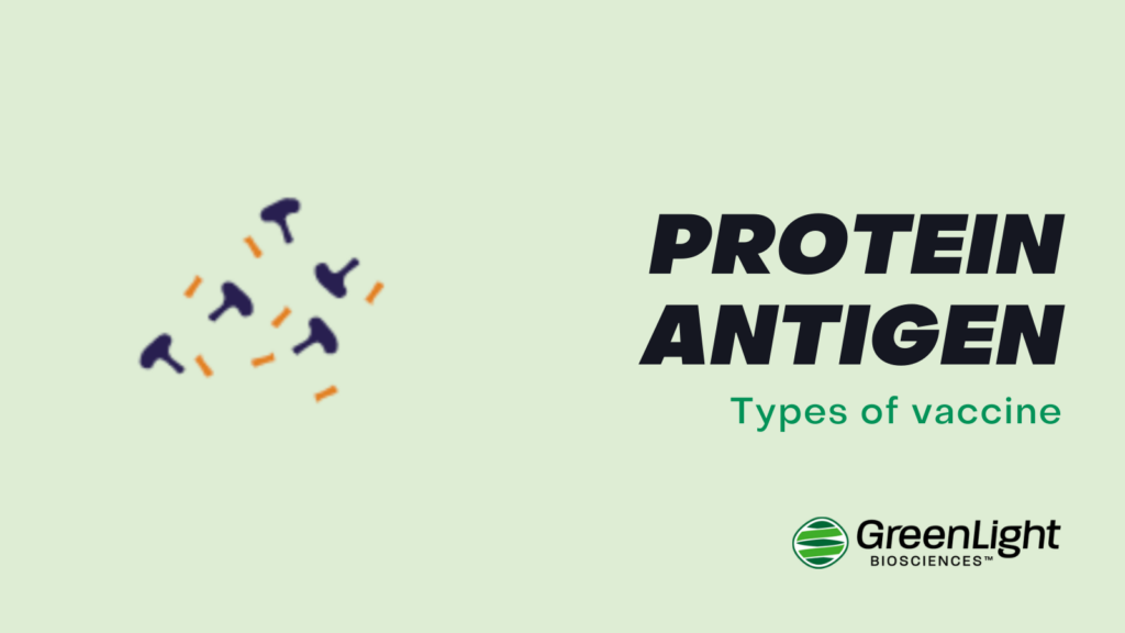 Protein Antigen vaccine