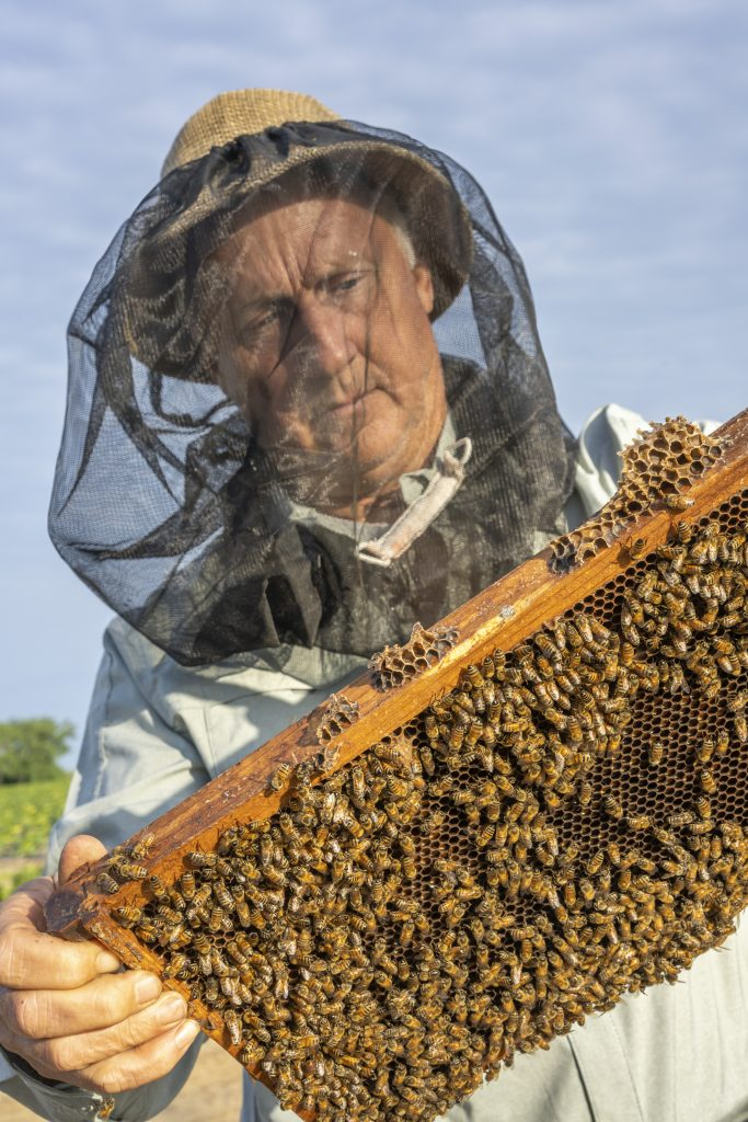 Beekeeker Barry Hart checks his hive of honey bees in Barwick, Georgia